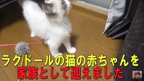 タケヤキ翔の人気の猫動画とは?